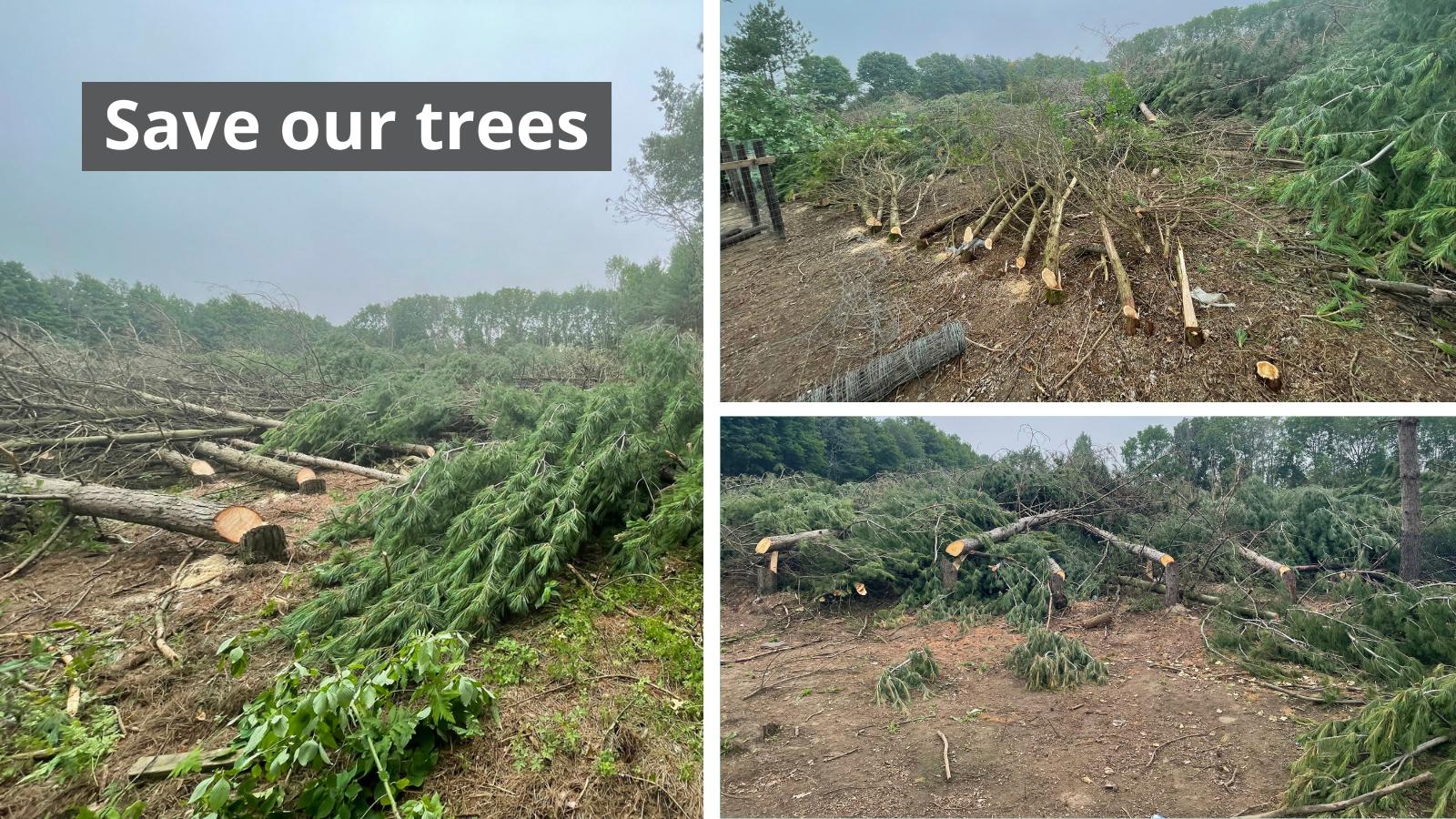 Cutdown trees
